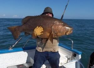 Réglementation de la pêche au Mérou géant