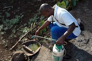 Suppression des gites larvaires au cimetière à compter du 1er avril 2011