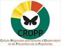 Communiqué sur la Papillonite diffusé par le CROPP de la Guyane.