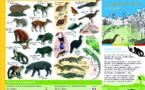 quotas de chasse en Guyane (qu'avons nous le droit ou pas de chasser ?)